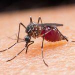 Малярия: симптомы, возбудители, диагностика и лечение