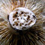Червивые грибы: чем они опасны и можно ли их есть