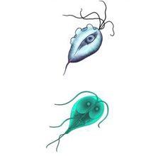 Жгутиковые паразиты: виды и чем они опасны
