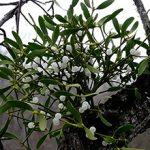 Растения-паразиты: общая характеристика и виды