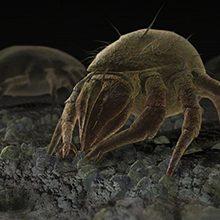 Сапрофиты и паразиты: что это и чем они отличаются