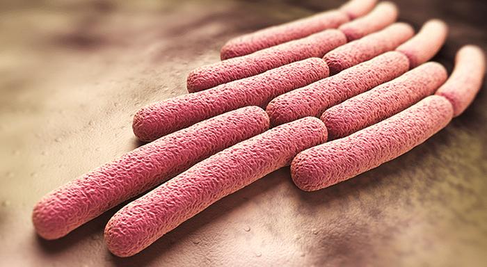 Бактерии рода Шигелла