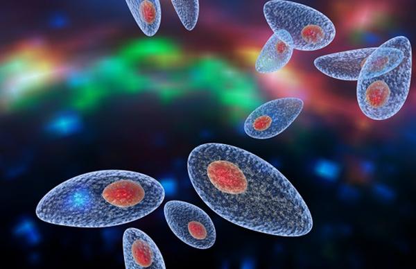 Токсоплазма в организме