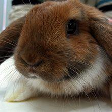 Глисты и паразиты у кроликов: признаки, и чем лечить