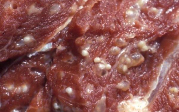 Трихинеллы в мясе