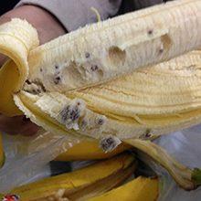 Черви и паразиты в бананах — откуда они берутся и насколько это опасно