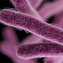 Бактерии-паразиты: виды и чем они опасны