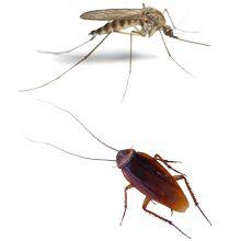 Насекомые-паразиты: виды, чем они опасны и как с ними бороться
