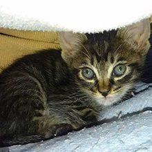 Кокцидиоз у кошек: причины, симптомы и лечение