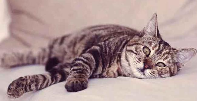 Симптомы у кошки
