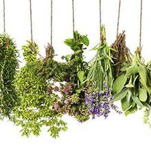 Травы, очищающие организм от шлаков и токсинов: описание и применение